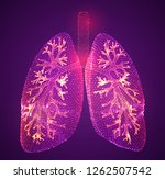 vector lungs and bronchi.... | Shutterstock .eps vector #1262507542