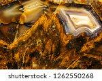 texture of beautiful natural... | Shutterstock . vector #1262550268