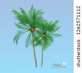 vector of palm tree icons on... | Shutterstock .eps vector #1262571112