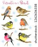 Design Set With Winter Birds...