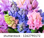 colorful hyacinth flowers....   Shutterstock . vector #1262790172