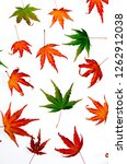 colorful maple leaves isolated... | Shutterstock . vector #1262912038