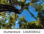 mahogany hammock trail  a... | Shutterstock . vector #1263028312