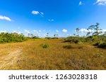 mahogany hammock trail  a... | Shutterstock . vector #1263028318