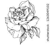 vector rose flower. isolated... | Shutterstock .eps vector #1263049102