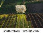 Artistic Spring Rural Landscap...