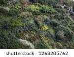 view of lush green trees and... | Shutterstock . vector #1263205762