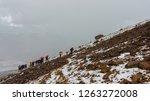 iliniza  cotopaxi   ecuador  ... | Shutterstock . vector #1263272008