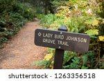 lady bird johnson grove trail... | Shutterstock . vector #1263356518