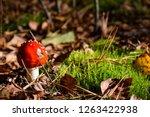 red amanita in moss | Shutterstock . vector #1263422938