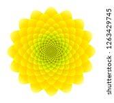 yellow sunflower inflorescence. ...   Shutterstock .eps vector #1263429745