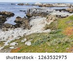 Wildflowers And Rocky Shore Of...