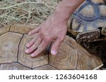 the man's hands are rubbing the ... | Shutterstock . vector #1263604168