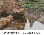 rocks along the seashore on the ... | Shutterstock . vector #1263853738