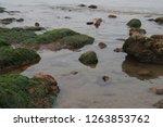 rocks along the seashore on the ... | Shutterstock . vector #1263853762