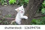 Stock photo kitten playing 126394736