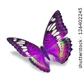 Stock photo purple butterfly flying isolated on white background 126402245