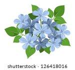 Blue Plumbago Flowers. Vector...