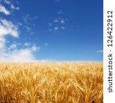 Golden Wheat Field Against Dee...