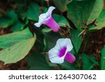 beautiful flowers and leaves. | Shutterstock . vector #1264307062