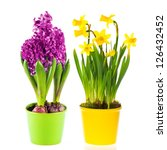 beautiful spring narcissus and...   Shutterstock . vector #126432452