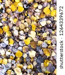 texture of fallen leaves | Shutterstock . vector #1264339672
