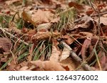 dead leaves  grass and branches ... | Shutterstock . vector #1264376002