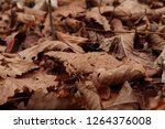 dry autumn leaves on the ground.... | Shutterstock . vector #1264376008