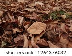 dry autumn leaf on the ground.... | Shutterstock . vector #1264376032