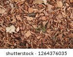 dry autumn leaves on the ground.... | Shutterstock . vector #1264376035