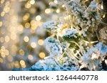 christmas tree closeup  light... | Shutterstock . vector #1264440778