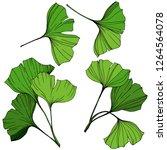 isolated ginkgo illustration... | Shutterstock . vector #1264564078