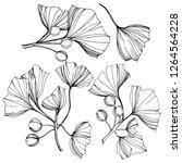 isolated ginkgo illustration... | Shutterstock . vector #1264564228