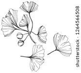 isolated ginkgo illustration... | Shutterstock . vector #1264566508