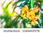 Nature Flowers Concept Orchids Floral - Fine Art prints