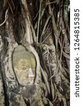 iconic buddha head entwined in... | Shutterstock . vector #1264815385
