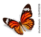 Stock photo monarch butterfly flying isolated on white background soft shadow underneath 126490058