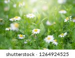 plants background with... | Shutterstock . vector #1264924525