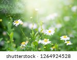plants background with... | Shutterstock . vector #1264924528