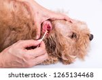 person cleaning inflammed ear... | Shutterstock . vector #1265134468