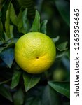 green orange tree. | Shutterstock . vector #1265354665