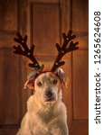 dowg with antlers | Shutterstock . vector #1265624608