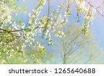 beautiful gentle landscape with ... | Shutterstock . vector #1265640688