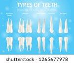 realistic illustration types of ... | Shutterstock .eps vector #1265677978