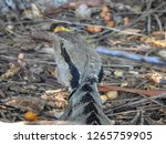 closeup of australian water... | Shutterstock . vector #1265759905