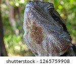 closeup of australian water... | Shutterstock . vector #1265759908