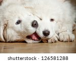 Stock photo fluffy puppies 126581288