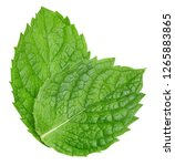 mint leaves isolated on white.... | Shutterstock . vector #1265883865