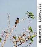 passerine songbirds  common...   Shutterstock . vector #1265912938