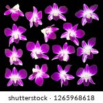 purple orchids isolated on...   Shutterstock . vector #1265968618